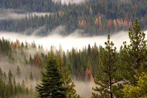 floresta serra nevada em nevoeiro