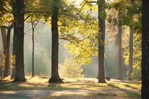 floresta de outono sob a luz do sol foto