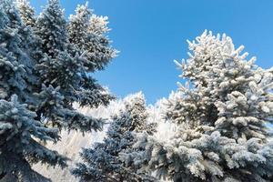 bela floresta de inverno em dia ensolarado
