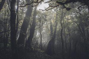floresta tropical no escuro foto