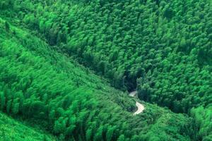 olhe para baixo na estrada através da floresta de bambu foto