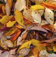 folhas de outono caídas na folhagem desbotada