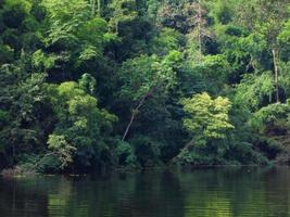 árvore verde na floresta e rio