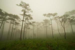floresta de pinheiros com neblina e campo de flores silvestres