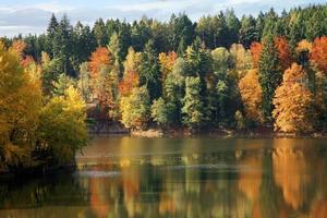 floresta de faia no casaco de outono.