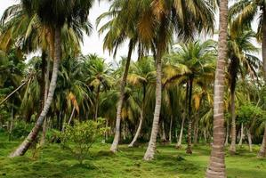 floresta de palmeiras verdes na mucura da ilha colombiana