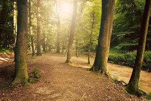 floresta linda de verão
