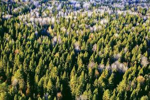 a floresta mista na vista superior do outono