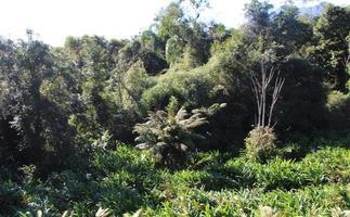 floresta tropical paraña foto
