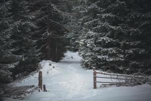 estrada coberta de neve em uma floresta de pinheiros