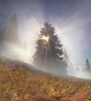 floresta mágica dos Cárpatos