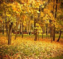 parque florestal vermelho vivo foto