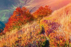 nascer do sol de outono colorido na floresta de montanha.