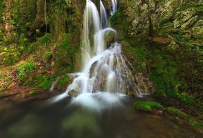 folhagem verde e caminho na floresta foto