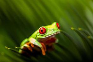 sapo exótico em floresta tropical foto