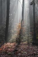 raios de sol através das árvores