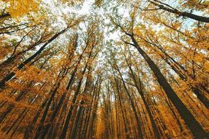 árvores de outono coloridas na floresta