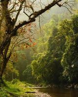 pequenos riachos na floresta