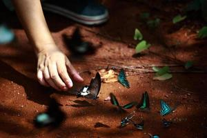mão pegando borboletas na floresta foto