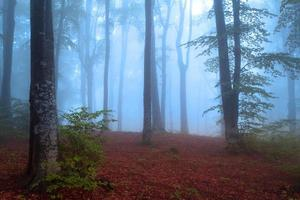 névoa azul de conto de fadas para a floresta