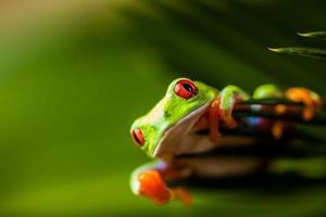 tema de floresta tropical tropical com sapo colorido foto