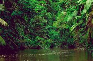 rio nas profundezas da floresta da selva. composição amazônica.