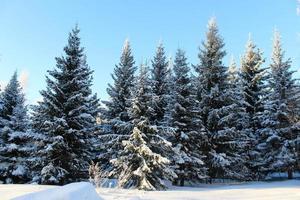 bela floresta com neve no inverno frio em dezembro