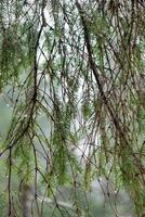 galhos de árvores molhados na floresta de inverno