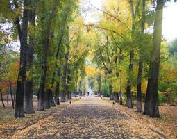 bela floresta de outono no parque nacional foto