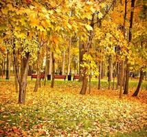 parque florestal amarelo vivo foto