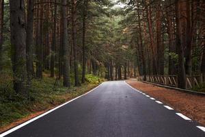 rodovia na floresta foto