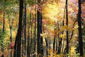 outono na floresta