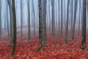 névoa e frio na floresta foto