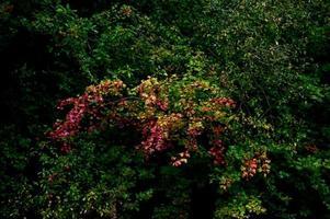 árvore colorida na floresta