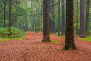 belas árvores altas na manhã da floresta de verão