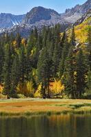 floresta de outono e céu azul