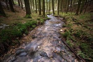 pequeno rio em uma floresta fria de inverno