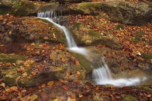 riacho de outono na floresta foto