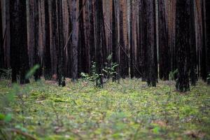 as árvores na floresta