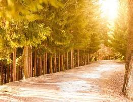 longo beco no parque ao longo da floresta