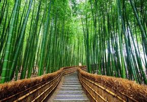 caminho para a floresta de bambu, arashiyama, kyoto, japão foto