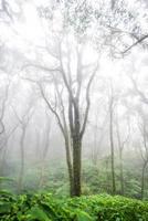 floresta de árvores na temporada de outono da tailândia