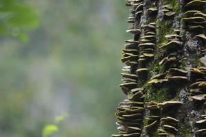 cogumelos em uma árvore