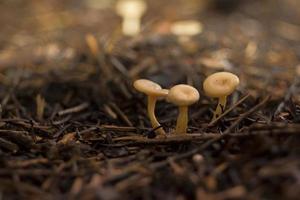 pequenos cogumelos depois da chuva