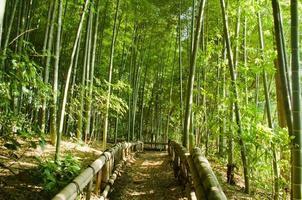 caminho da floresta de bambu