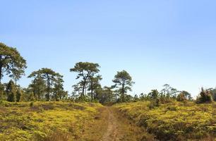 dificuldades caminho da floresta foto