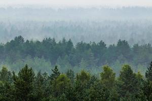 névoa sobre a floresta