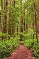 caminho através de uma floresta