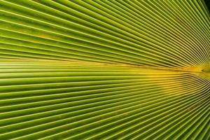imagem de folhas de palmeira verdes na natureza