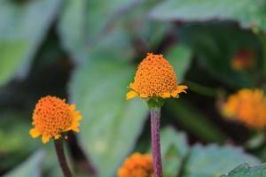 linda flor selvagem na floresta